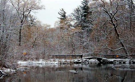 the secret pond 森の中の美しい池の1年半に渡る景色の移り変わりを追ったタイムラプスムービー buzzap バザップ
