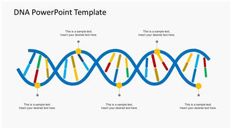 Dna Model Template by Organization Culture Dna Powerpoint Templates