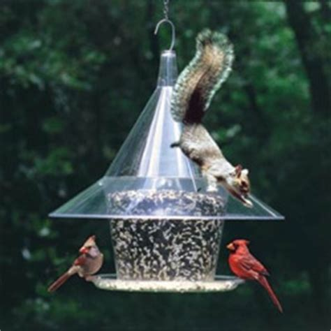 squirrel proof bird feeder review of the top rated