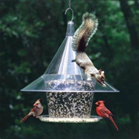 five inexpensive ways to squirrel proof your bird feeder