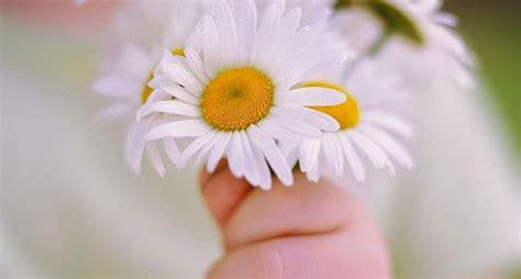 donare un fiore vendita fiori on line fiorista fiori on line vendita