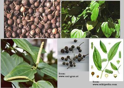 Minyak Nilam Medan essential corner engineered essential