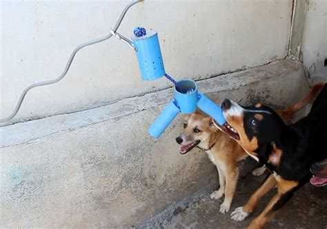 designboom dogs dog shelter toys designboom com