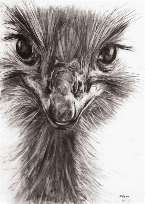 drawn animal charcoal drawing pencil   color drawn