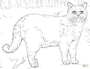 Tabby Cat Coloring Sheets Pages sketch template