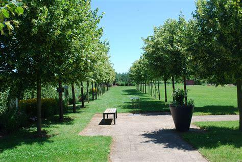jardin du palais royal le jardin du palais royal les jardins de colette