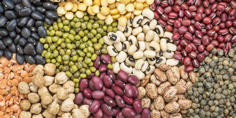 legumes cuisines what s a legume and why should i eat it sunnybrook