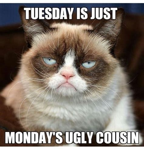 Tuesday Memes Funny - 3703 best images about grumpy cat cute cat on pinterest