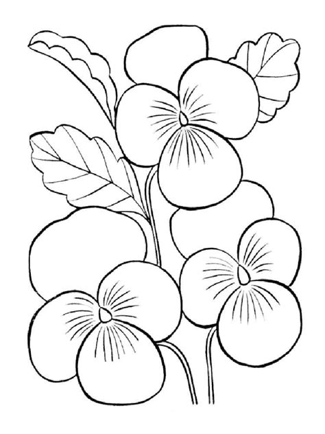 Violet Flower Coloring Page violet coloring pages and print violet coloring