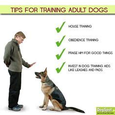 how to house train a grown dog 1000 images about know how to train your dog on
