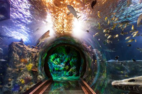 concord aquarium construction to start in july news