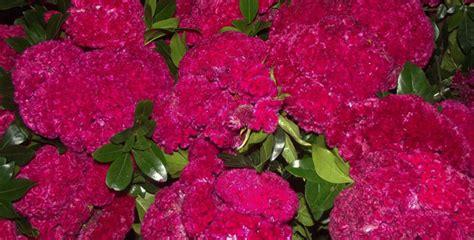 imagenes de flores de muertos nails by tenshi dise 241 o de d 237 a de muertos