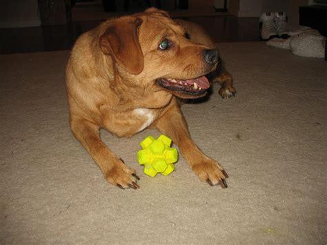 toys for blind dogs img 1448 blind toys