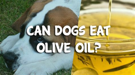 can dogs olive can dogs eat olive pet consider