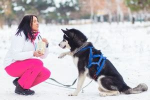 comfortable temperature for dogs frigid weather dangers for dogs thedogtrainingsecret com