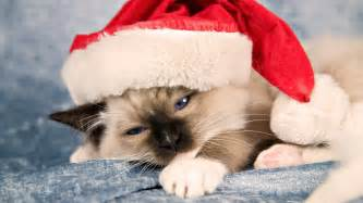 Grumpy Cat As Grumpy Santa Quot I Was Santa Once It Was Horri » Home Design 2017