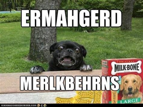 Ermahgerd Animal Memes - lol funny meme ermahgerd