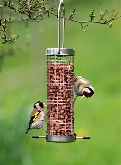 a comprehensive guide on summer bird feeding