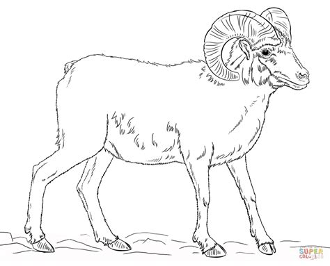 mountain sheep coloring page bighorn sheep clipart black and white pencil and in