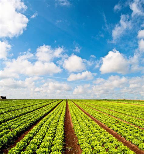 Agricultural Finance From Crops To Land Water And Ebook E Book farming reits nareit