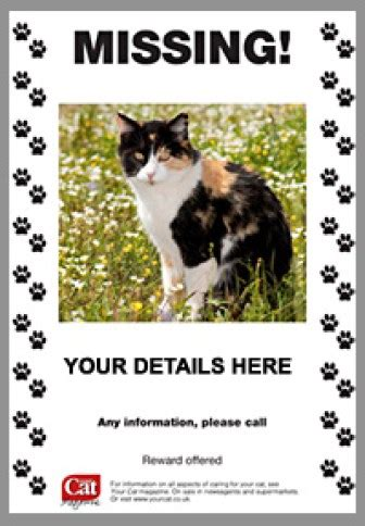 printable cat poster 21 free missing cat poster template word excel formats