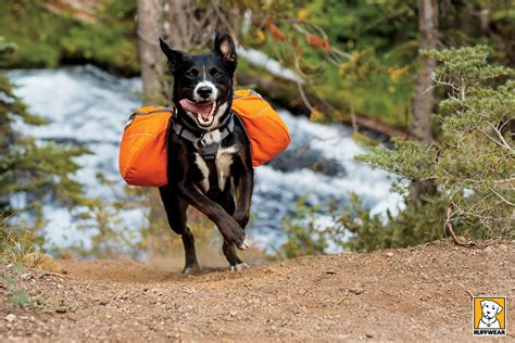 are dogs pack animals ruff wear approach pack recreational back pack