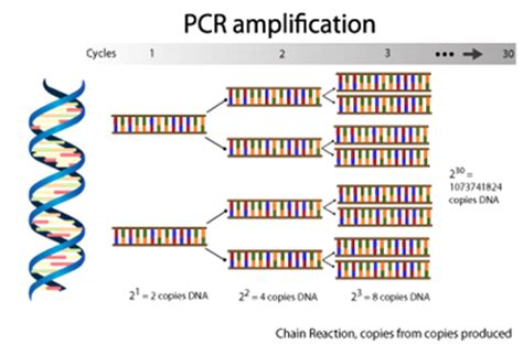 how much template dna for pcr iso 22000 resource center revolution of food quality and