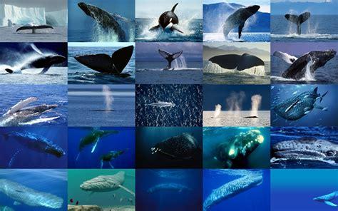 la baleine et lescargote les baleines qui sont elles membres
