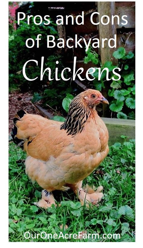 17 Best Images About Ducks Chickens On Pinterest A Benefits Of Backyard Chickens