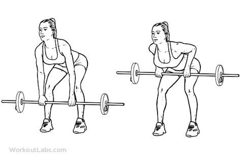 Barbel Suzuki dumbbell exercises for back