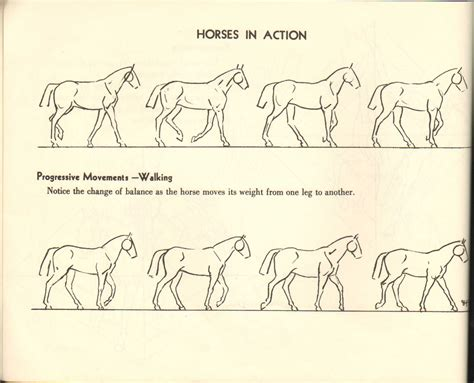 doodle draw the drawing horses img 16 jpg