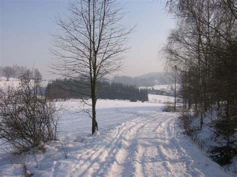 free images tree outdoor snow cold winter road