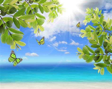 fresh green leaves and butterfly on natural background