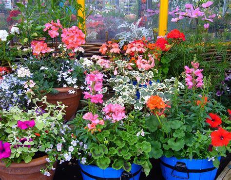 free photo flowering pot plants plant display free image on pixabay 57476