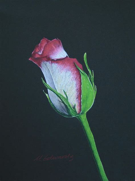 rose bud drawing by marna edwards flavell