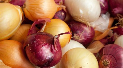 onions bad for dogs are onions bad for dogs breeds names dogs for sale with a pitbull