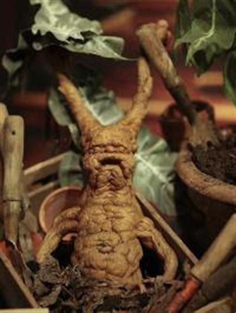 the little prepper doc mandrakes mallots malts natural