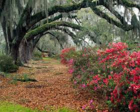 Landscaping Savannah Ga by Beautiful Wallpapers