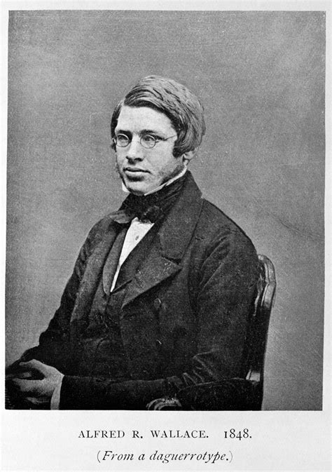Alfred Russel Wallace Biografi theory of evolution one in wallace s universe the journal of culture