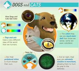 what animals see in color animals light eye color science vision sight lenses