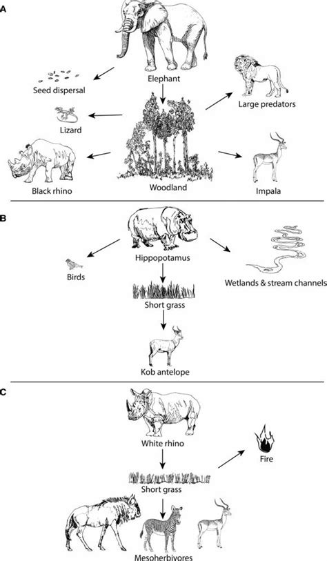 We've driven 60 percent of the Earth's large herbivores to
