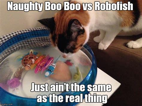Funny Naughty Memes - naughty boo boo cat vs robofish imgflip