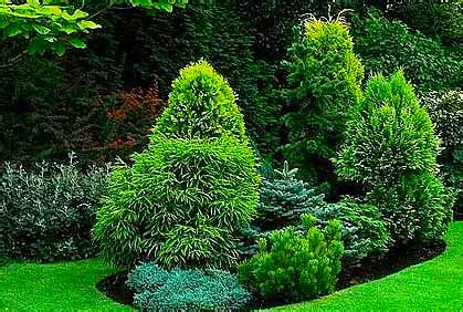 25 best ideas about evergreen garden and picture design types of landscaping evergreens