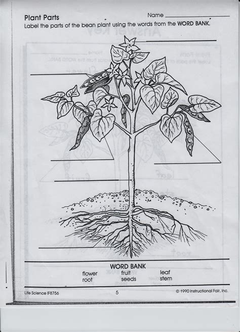 Plant Parts Worksheet by Free Flower Pollination Coloring Pages