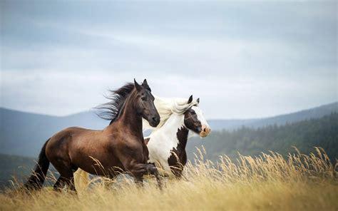 Nice Hourse horses running hd wallpaper for desktop free download
