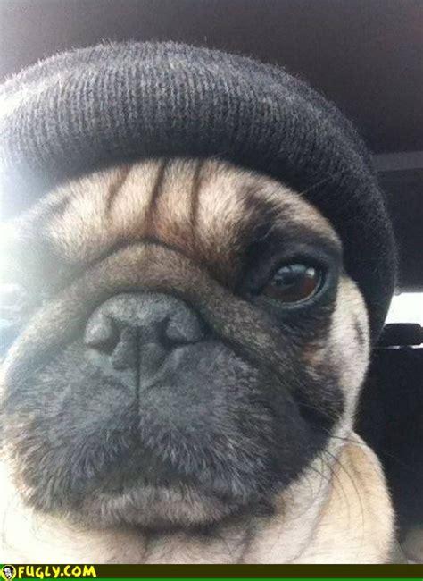 pug thug thug pug