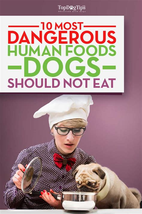 foods not to feed dogs foods that are dangerous to dogs foodfash co