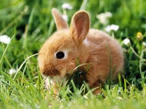 Animals beautiful sweet funny cute easter bunny free high quality