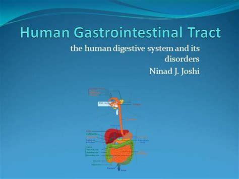 Human Digestive System Animation Ppt Human Digestive System Ppt