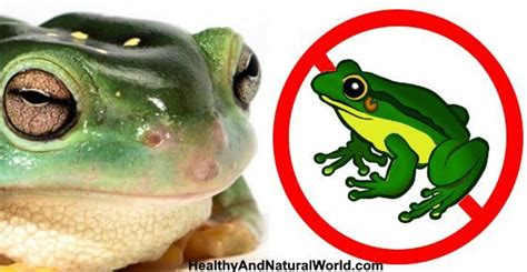 how to get rid of frogs in my backyard how to get rid of frogs naturally the o jays